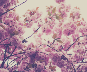 flowers, pink, and beautiful image