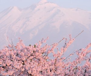 mountains, pink, and flowers image