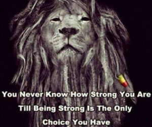 dreads, lion, and strength image