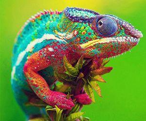 amazing, animal, and glamorous image