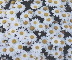 flowers, grunge, and wallpaper image