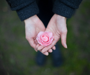 hands, pink, and flowers image