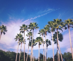 beautiful, Dream, and palm trees image