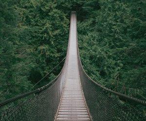 nature, bridge, and green image