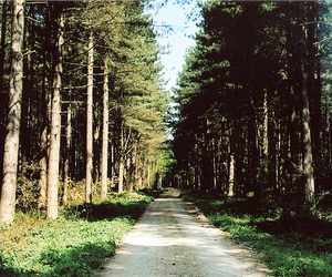 forest, woods, and road image