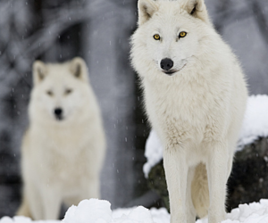 animal, beauty, and snow image