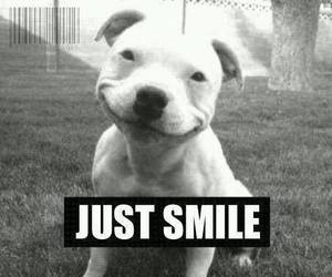 smile, dog, and black and white image