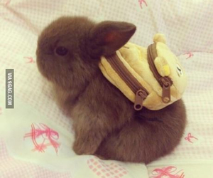 adorable, funny, and bunny image