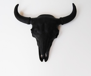 black, animal, and skull image