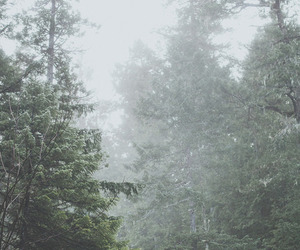 nature, forest, and inspiration image
