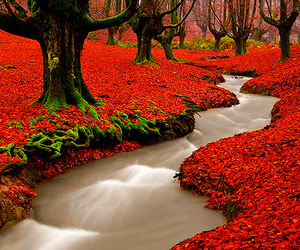 red, nature, and tree image