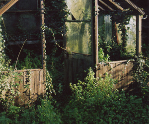 nature, green, and vintage image