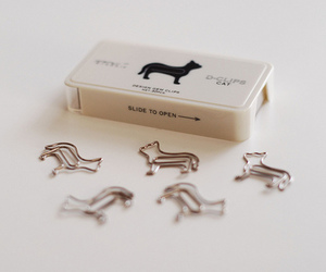 cat and paper clip image