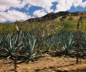 camino, mexico, and agave image