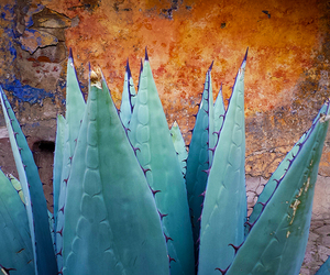 mexico, tequila, and jalisco image