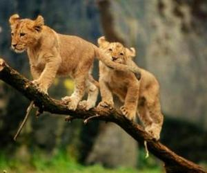 animals, cubs, and jungle image