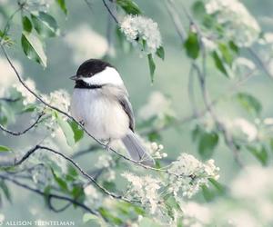 bird, nature, and beautiful image