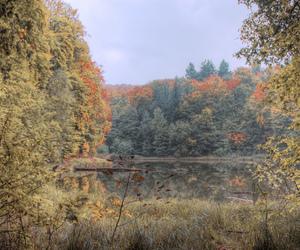 autumn, trees, and photomatix image