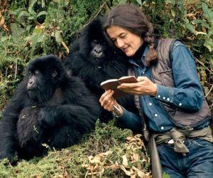 gorilla and love image