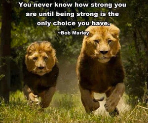 bob marley, quote, and strong image
