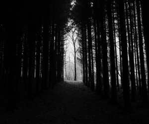 black, white, and forest image