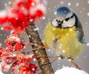bird, winter, and nature image