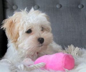 pink, puppy, and toy image