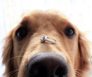 dog, ring, and animal image