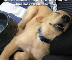 cute, funny, and dog image