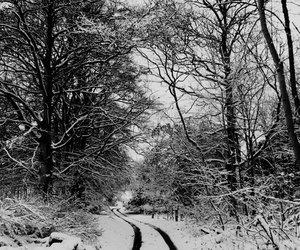 black white, winter, and cold image