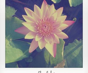 beautiful, flower, and vintage image