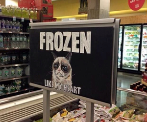 funny, frozen, and cat image