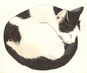 cat, cute, and draw image