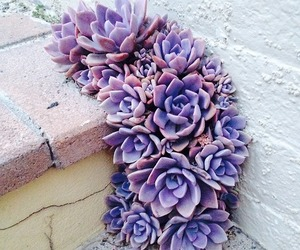 flower and succulents image