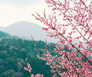 flower, mountains, and nature image