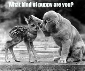 adorable, animal, and black and white image