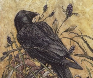 raven, crow, and illustration image