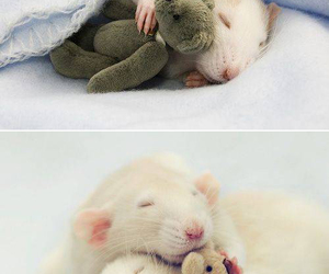 lovely, mouse, and rat image