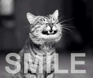 cat, pet, and smile image