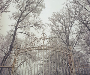 gate, tree, and winter image