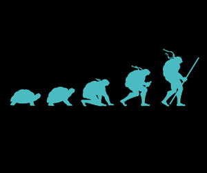 turtle and evolution image
