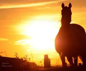 horse - couché de soleil image