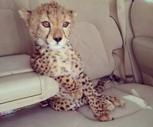 animal, cute, and car image