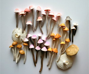 colors, great, and mushroom image
