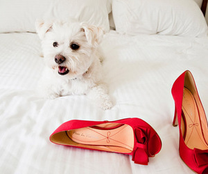 dog, red, and shoes image