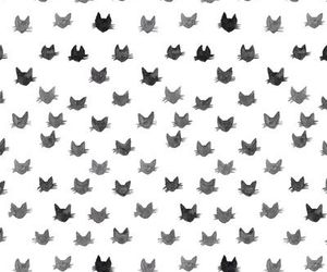 cats, background, and black and white image