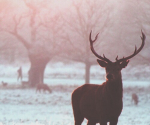 animals, antlers, and deer image