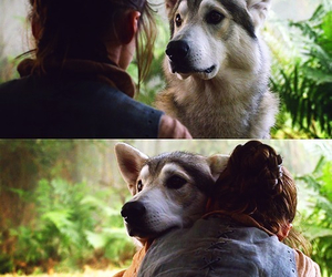 dog and game of thrones image