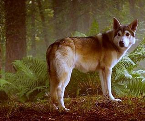 nymeria, game of thrones, and direwolf image