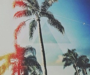 colourful, palmtree, and photography image